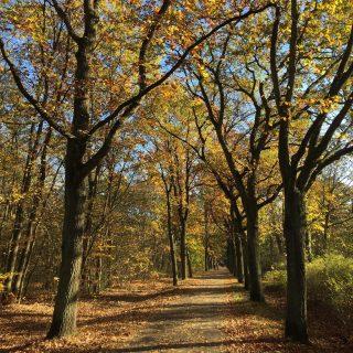 Berlino Explorer consiglia: Autunno a Müggelsee 🍂 #bicitour #berlino #berlinoexplorer #herbst #autunno