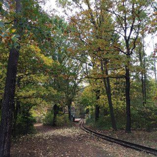 Berlino Explorer consiglia: Autunno a Berlino nel Wuhlheide 🍁