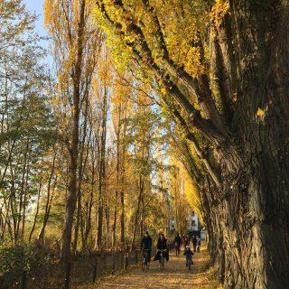 Gelbe Regen 🍂 Bicitour a Rummelsburg. Curiosi di ricevere le novità e i consigli di @berlinoexplorer via Newsletter? Seguite il link in bio📭 #bicitour #rummelsburgerbucht #foliage #autunno #berlin #berlino #berlitour #berlinoexplorer