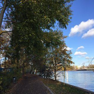 Berlino Explorer Autunno a Plänterwald 🍂🍃🍁 #herbst #plänterwald #berlin #berlinoexplorer